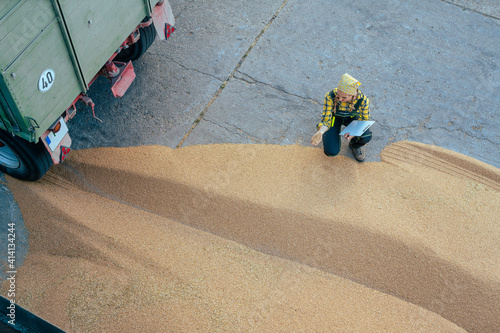 Fototapeta Grain being brought by tractor to the storage or granary obraz