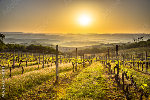 Fototapeta premium Vineyard in foggy hills