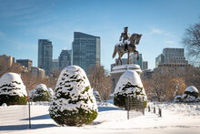 Snow On The Bushes And Landscaping Of The Public Garden In Downtown Boston