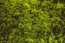 Background From Live Green Moss, Tree Bark, Dry Leaves, Copy Space.