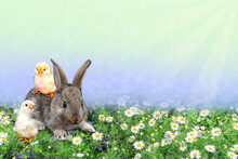 A Gray Little Rabbit With Chickens In A Blooming Green Clearing.