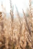 Sucha trawa na łące