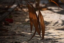 Dried Leaves Touching On The Ground