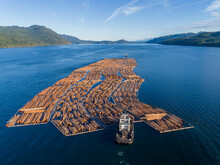 Canada, British Columbia, Campbell River, Aerial View Of Tugboat Pushing Boom Of Freshly Cut Logs Toward Seymour Narrows Along Vancouver Island On Summer Evening