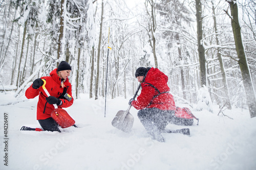Fototapeta Mountain rescue service on operation outdoors in winter in forest, digging snow with shovels. obraz