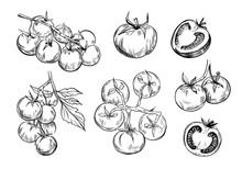 Tomato Sketch. Line Art. Set  Illustrations. Black Vector Outline On Transparent Background