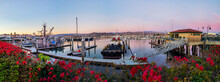 A Panorama Of A Calm Harbor Of Ships Under A Pink Sunset With Red And Pink Bougainvillea Plants In The Foreground.  There Are Multiple Ships In The Harbor, With White Docks Visible.