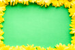 Leinwandbild Motiv layout of bright yellow natural flowers on green background. Floral frame made of daisies. pattern of fresh plants on solid colored background. spring, summer, women day, mothers Day, ecology concept