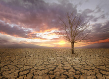 Dry Cracked Land With Dead Tree And Sky In Background A Concept Of Global Warming