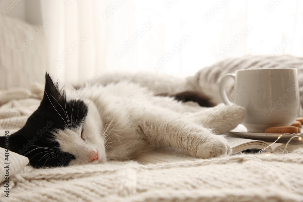 Fototapeta Adorable cat lying on blanket with open book near cup of hot drink and cookies
