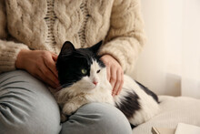 Woman Stroking Adorable Cat In Room, Closeup