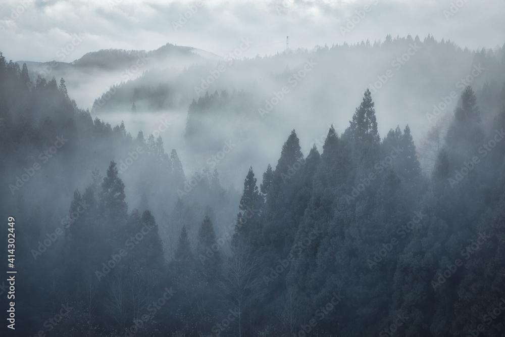Fototapeta 日本の霧の森NO写真素材集