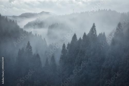Foto 日本の霧の森NO写真素材集
