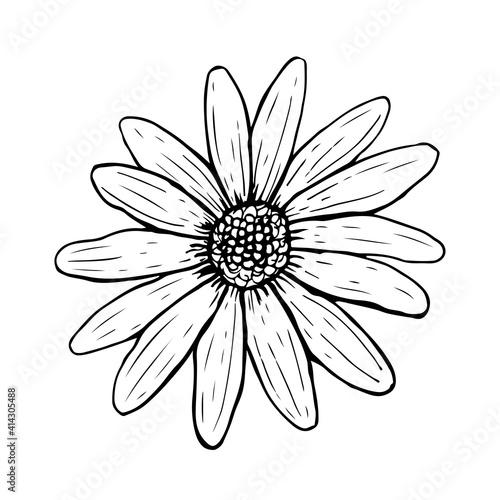 Fényképezés Doodle daisy flower isolated on white background