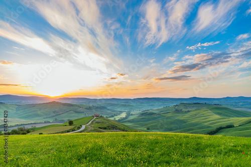Fototapeta Flowering meadow in a rural landscape at sunrise obraz