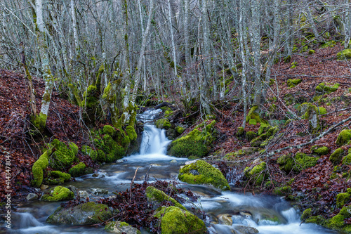 Stream and beech forest in winter with the ground covered with leaves. Cabornera, León, Spain. © LFRabanedo
