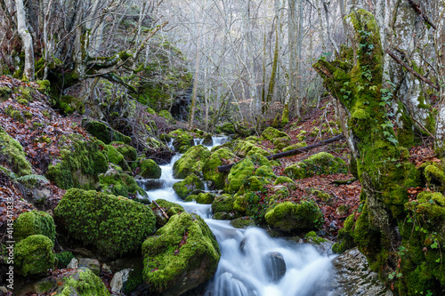 Mountain stream, beech forest with the ground covered with leaves and the rocks with green moss. Cabornera, León, Spain. © LFRabanedo
