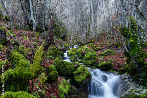 Mountain stream, beech forest with logs and rocks covered with moss. Cabornera, León, Spain. © LFRabanedo