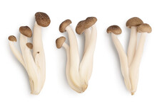 Brown Beech Mushrooms Or Shimeji Mushroom Isolated On White Background With Clipping Path. Top View, Flat Lay. Set Or Collection