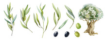Olive Branch, Fruit, Leaves And Tree Watercolor Set. Black And Green Raw Organic Olive Plant Element Natural Collection. Olive Branch With Green Leaves And Fruit Elements On A White Background.