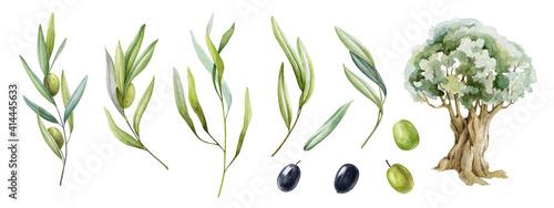 Fotografie, Obraz Olive branch, fruit, leaves and tree watercolor set