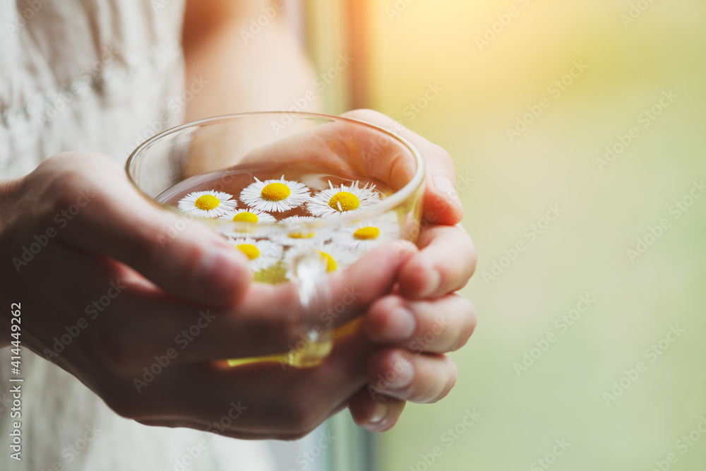 Fototapeta female hands holding cup of herbal tea with chamomile flowers