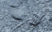 Shoe Footprint On Gray Cement Uneven Floor Background