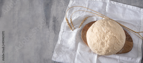 Obraz Fresh homemade wheat dough ready for baking self-made bread or pizza at home, ears of wheat near on the table. Top view, banner. - fototapety do salonu