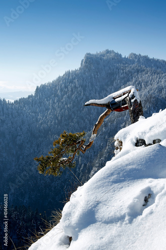 famous relic pine tree on the summit of Sokolica in Pieniny Mountains, Poland; secured after recent damages