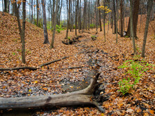 619-66 Creekbed In The Autumn Forest