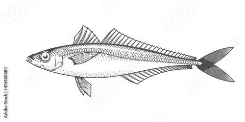 Fototapeta Horse mackerel sketch, hand drawn fish, jack mackerel seafood menu, scad fish in