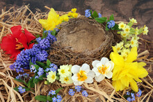 Flown The Nest Concept With An Empty Natural Nest & Spring Flowers Of Daffodils, Narcissus, Tulip, Grape Hyacinths & Forget Me Nots On Rustic Wood Background.