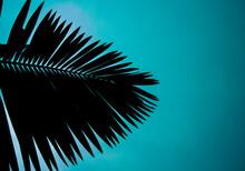Palm In Shadows Under A Blue Sky