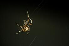 Spider Making Web At Night Close Up
