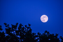 A Full Moon Surrounded By A Dark Blue Sky And The Silhouette Of Trees