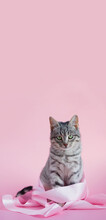 Beautiful Young Gray Kitty In A Pink Ribbon On A Pink Background. Looking Into The Camera. Verical Format. Banner. Copyspace