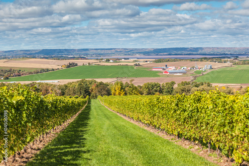 Obraz na plátně Canada, Nova Scotia, Annapolis Valley, Wolfville. Local vineyard.