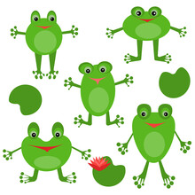 Set Of Cute Frogs, Positive Green Characters And Swamp Flowers