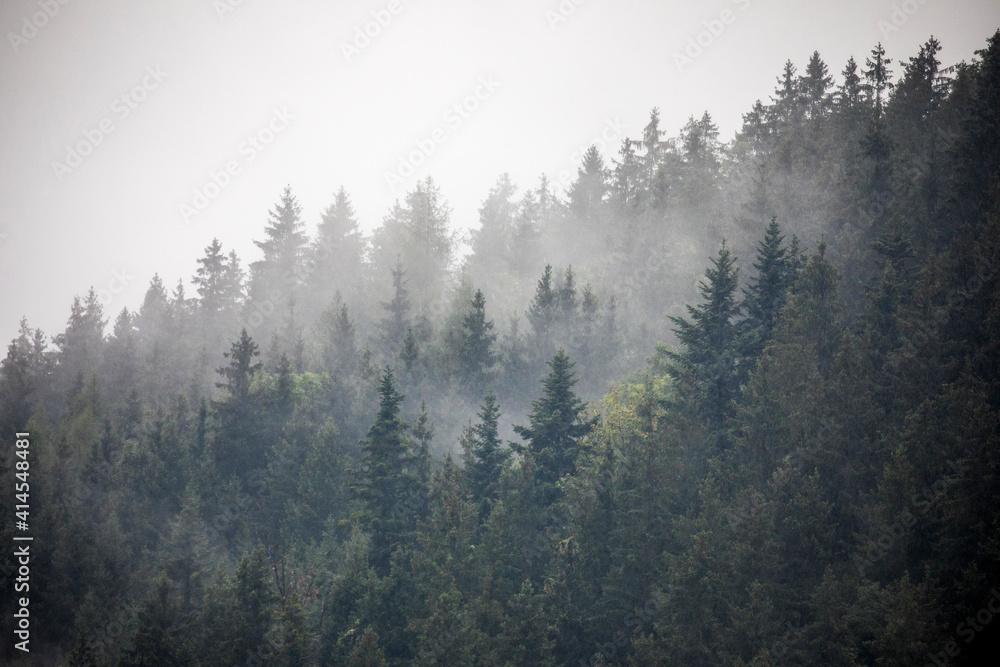 Fototapeta Europe, Germany, Bavaria, Berchtesgaden, Hillside Forest in Early Morning Fog