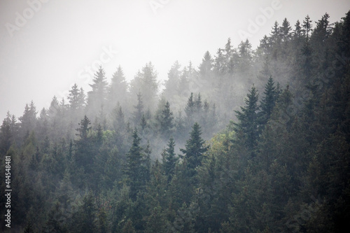 Europe, Germany, Bavaria, Berchtesgaden, Hillside Forest in Early Morning Fog Wallpaper Mural