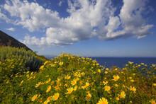 Europe, Greece, Santorini. Wildflowers And Ocean Landscape.