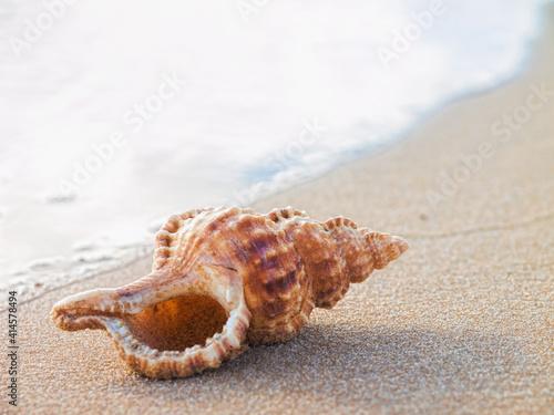Fotografie, Obraz shell