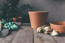 Ceramic Pots On Old Gray Wooden Table, Tulip Bulbs, Green Gloves, Garden Shovel