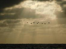 Bandada De Aves Cruzando El Cielo Sobre El Mar.