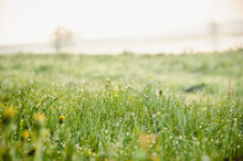 Art Abstract Spring Background Or Summer Background With Fresh Grass. Perfect Green Background Of Fresh Herbs With Dew Drops. Wet Grass Dew Blur The Background Of The Meadow Of Sunlight Bokeh.