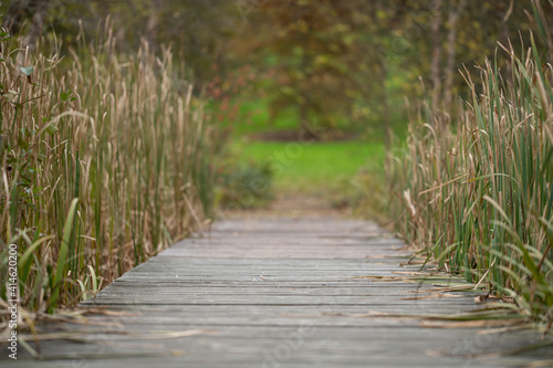 Canvas Print camino de madera en parque