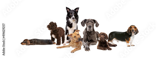 seven different dog breeds Fotobehang