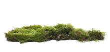 Moss On Tree Bark, Mossy Wood Isolated On White Background