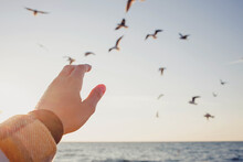 Woman's Hand In Sunlight Close-up Trying To Reach Out Seagulls