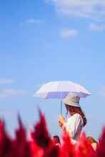 A Woman In A Vintage Dress, Wearing A Hat And Holding A White Umbrella, Walks Alone In The Morning In The Beautiful Red Flower Garden Looking For Her Lover. The Concept Of Loneliness Of A Young Woman